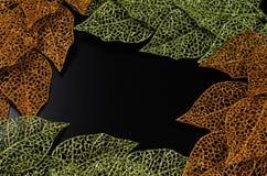 框架金黄绿色叶子 免版税库存照片