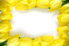 框架黄色 免版税图库摄影