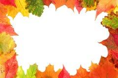 框架组成由五颜六色的秋叶 免版税库存照片