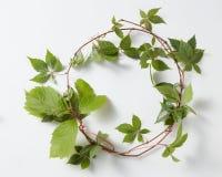 框架绿色常春藤植物常春藤属螺旋 库存图片