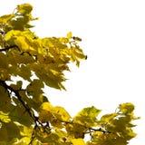 框架leafe 库存图片