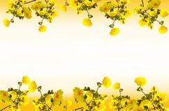 框架Tabebuia chrysantha花 免版税库存图片