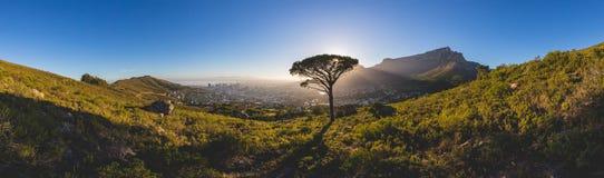 桌山全景在日出的开普敦 免版税图库摄影