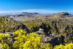 桌山国家公园,南非 库存图片