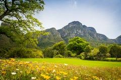 桌山开普敦,南非 免版税库存图片