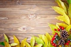 桌用秋叶和莓果装饰了 秋天 秋天背景特写镜头上色常春藤叶子橙红 库存图片