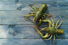 桌的木表面上的活小龙虾 免版税图库摄影