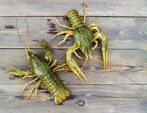 桌的木表面上的活小龙虾 免版税库存图片