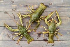 桌的木表面上的活小龙虾 免版税库存照片