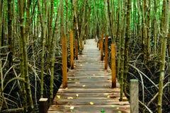 桐树橛皮带-美洲红树朴的Nam Krasaeg森林木板走道 免版税库存照片