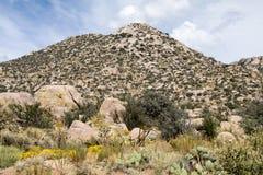 桑迪亚山,在Cibola森林上 免版税图库摄影