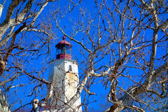 桑迪勾子灯塔通过树在新泽西 免版税库存图片