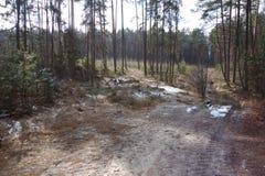 桑迪方式通过森林 库存照片