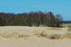 桑迪沙丘和一个森林在背景中反对蓝天 免版税图库摄影