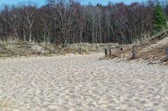 桑迪沙丘和一个森林在背景中反对蓝天 免版税库存照片