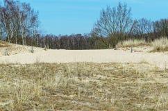 桑迪沙丘和一个森林在背景中反对蓝天 免版税库存图片