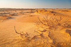桑迪沙丘在阿布扎比附近的沙漠 免版税图库摄影