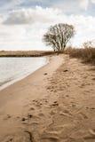 桑迪河海滩和一棵光秃的树 库存照片