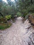 桑迪足迹在Slowinski国家公园,波兰 免版税库存照片