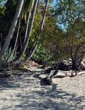 桑迪道路穿过一个热带森林 库存照片