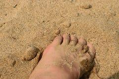 桑迪feets 库存照片