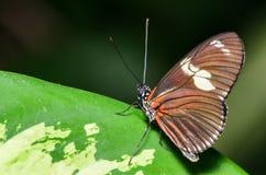 桔子、布朗和白色蝴蝶 库存图片