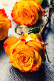 桔子上升了 上升了黄色 在花岗岩背景的几朵橙色玫瑰 库存照片