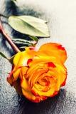 桔子上升了 上升了黄色 在花岗岩背景的几朵橙色玫瑰 库存图片