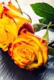 桔子上升了 上升了黄色 在花岗岩背景的几朵橙色玫瑰 免版税图库摄影