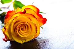 桔子上升了 上升了黄色 在花岗岩背景的几朵橙色玫瑰 图库摄影