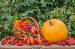 桔子和红色被定调子的菜 库存照片