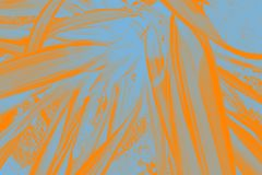 桔子和蓝色叶子 免版税库存图片