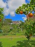 桔子在拿坡里从事园艺那不勒斯,意大利植物园里  免版税库存图片