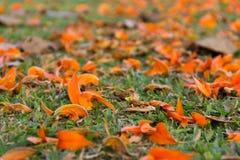 桔子在背景的被弄脏的花 免版税图库摄影