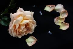 桔子玫瑰构筑与水晶和瓣 免版税图库摄影