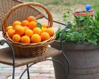 桔子篮子在一把椅子的在盆的草本旁边 免版税库存图片