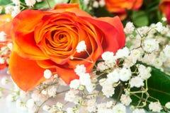桔子美丽的花束上升了与白花特写镜头 免版税库存照片