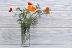 桔子花束开花在一个玻璃花瓶的eshsholtsiya 免版税库存图片