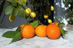 桔子,果子静物画与阳光的 库存图片
