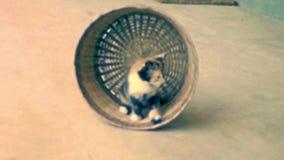 档案与宠物玩具的小猫 股票视频