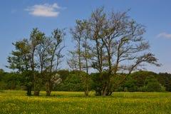 桤木老春天结构树 免版税库存图片
