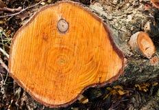 桤木黑色环形结构树 库存照片