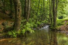 桤木围拢的山小河 图库摄影
