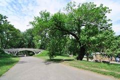 桥梁中央公园结构树 免版税库存照片