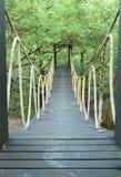 桥梁中心保护美洲红树 免版税库存图片