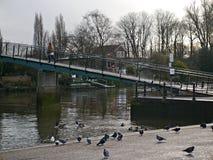桥梁到鳗鱼在泰晤士的饼海岛在Twickenham米德塞科斯, 免版税库存图片