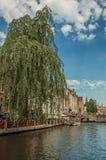 桥梁和叶茂盛树与砖瓦房在运河` s在一个晴天渐近在布鲁日 免版税库存照片