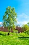桥梁和桦树 免版税图库摄影