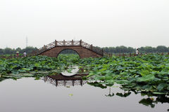 桥梁和莲花叶子 库存照片