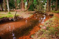 桥梁在充满活力的流的秋天森林 库存照片